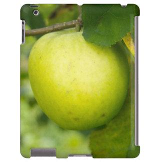 Apple verde en una rama de árbol