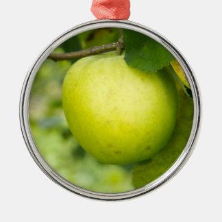 Apple verde en una rama de árbol adorno