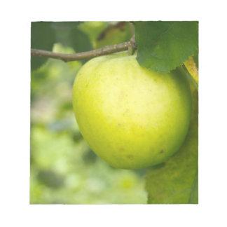 Apple verde en una rama de árbol blocs de papel