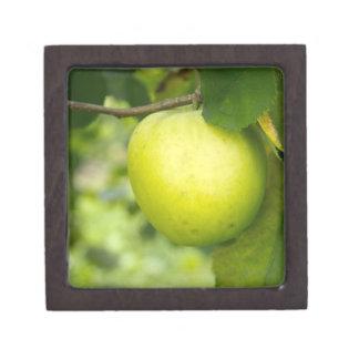 Apple verde en una rama de árbol caja de joyas de calidad