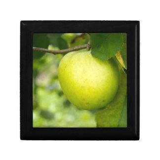 Apple verde en una rama de árbol cajas de recuerdo