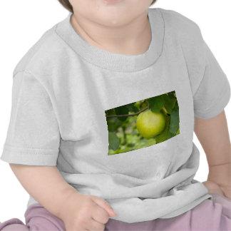 Apple verde en una rama de árbol camiseta