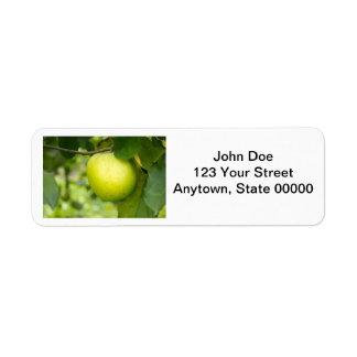Apple verde en una rama de árbol etiqueta de remite