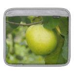Apple verde en una rama de árbol funda para iPads