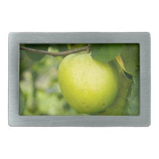 Apple verde en una rama de árbol hebillas cinturón rectangulares