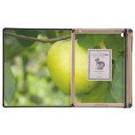 Apple verde en una rama de árbol iPad carcasa