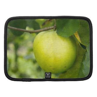 Apple verde en una rama de árbol organizadores
