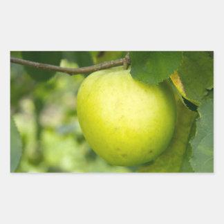 Apple verde en una rama de árbol rectangular pegatinas