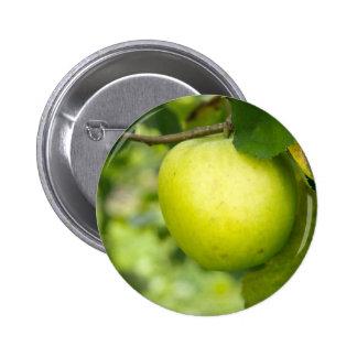 Apple verde en una rama de árbol pin