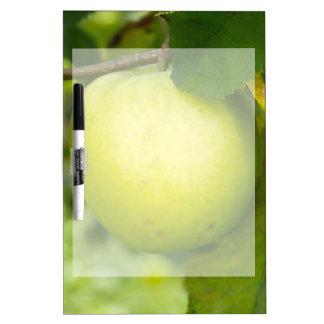 Apple verde en una rama de árbol pizarras blancas de calidad