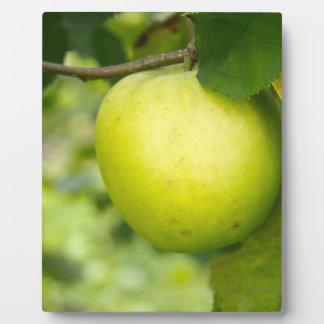 Apple verde en una rama de árbol placas