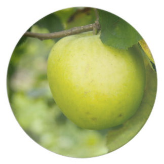 Apple verde en una rama de árbol platos para fiestas
