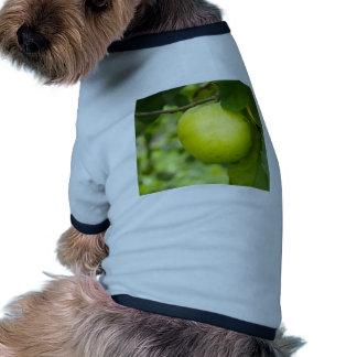 Apple verde en una rama de árbol camisetas de perro