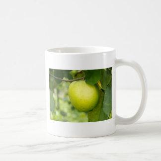 Apple verde en una rama de árbol tazas