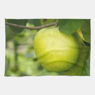 Apple verde en una rama de árbol toallas