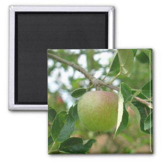 Apple verde jugoso imán cuadrado