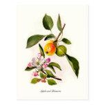Apple y flor postal