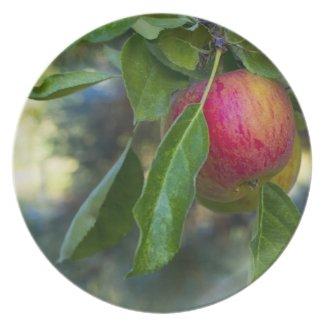 Apples 1 dinner plates