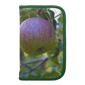 Apples 1 organizers