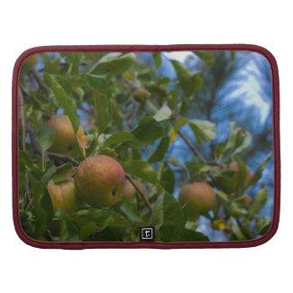 Apples 2 organizer