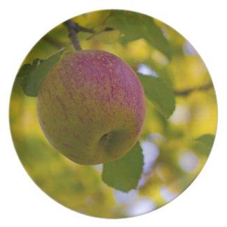 Apples 2 plates