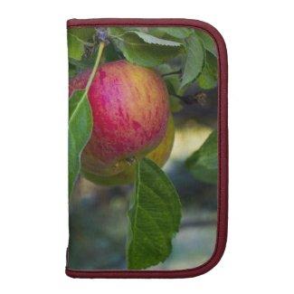 Apples 3 organizers