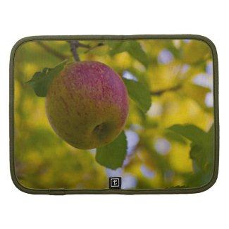 Apples 4 organizer