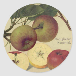Apples Botanical Vintage Fruit Illustration Classic Round Sticker