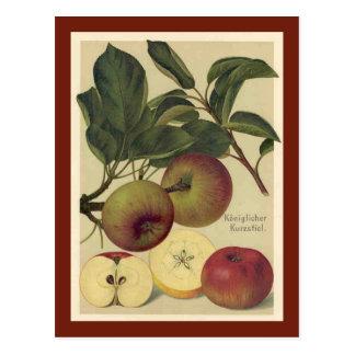 Apples Botanical Vintage Postcard