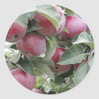 apples classic round sticker