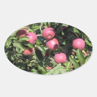 Apples - Dunham, Quebec Oval Sticker