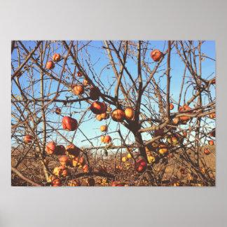 Apples In Autum Poster