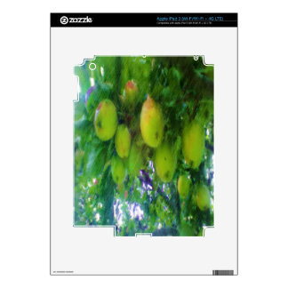 Apples on a tree skin for iPad 3