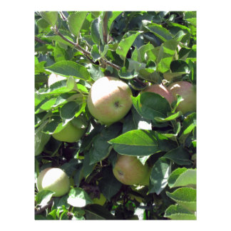 Apples on tree branches letterhead