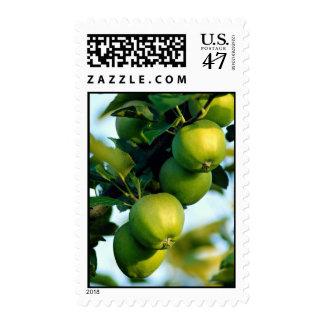 Apples, Ontario, Canada Postage