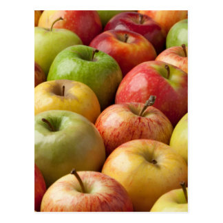 Apples - Ripe & Colorful Postcard