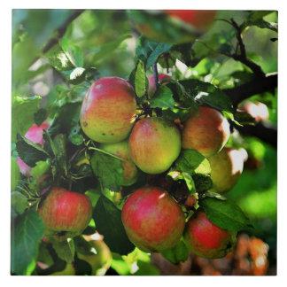 Apples Tile