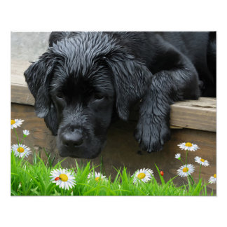 Appreciate the Little Things - Black Labrador Poster