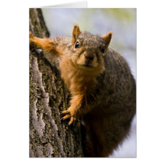 Apprehensively Inquisitive Greeting Cards