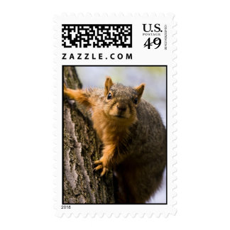Apprehensively Inquisitive Stamp