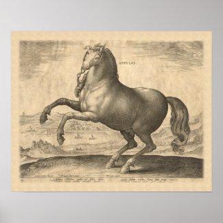 Appulus Italian Horse from Puglia Engraving