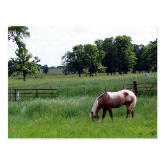 Appy en la granja tarjetas postales