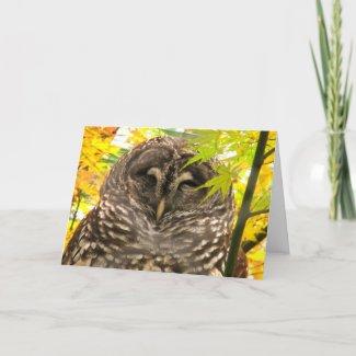 Appy Owlidays Card