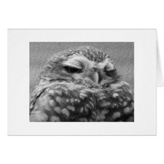 Appy Owlidays. Cards