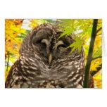 Appy Owlidays Greeting Card