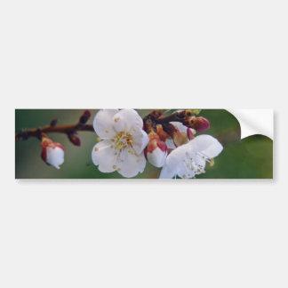 apricot blosom bumper sticker