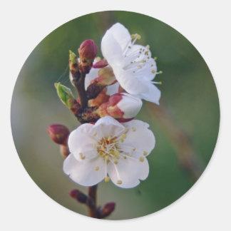 apricot blosom stickers