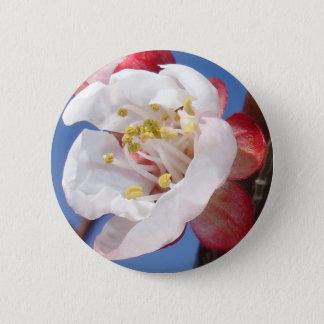 Apricot Blossom Button