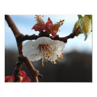 Apricot Blossom Card