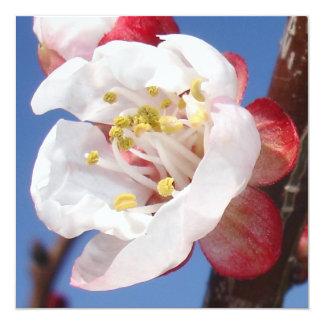 Apricot Blossom Invite